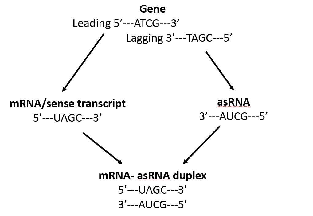 describe 3 main differences between rna and dna