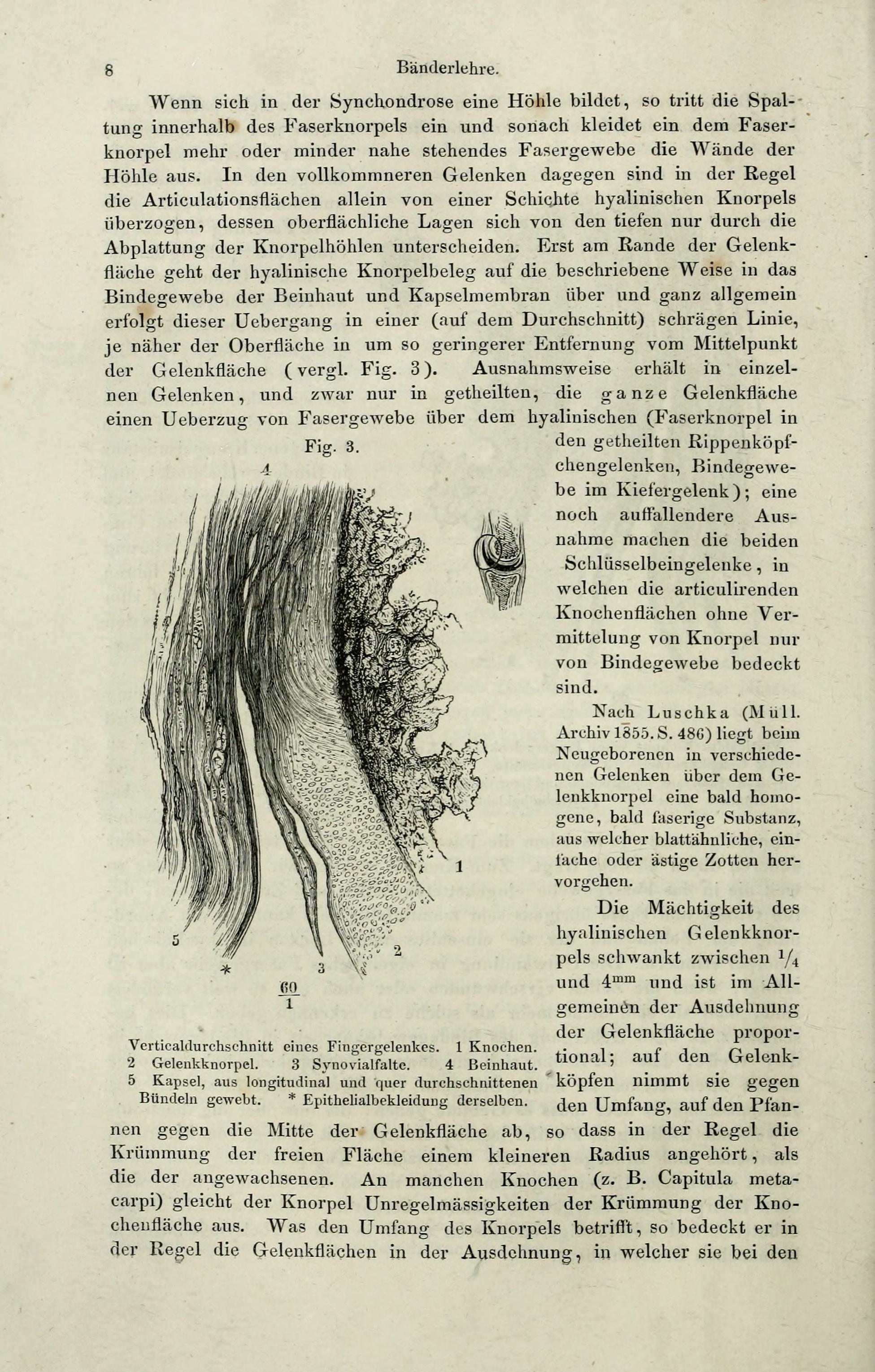 File:Handbuch der systematischen Anatomie des Menschen (Page 8 ...