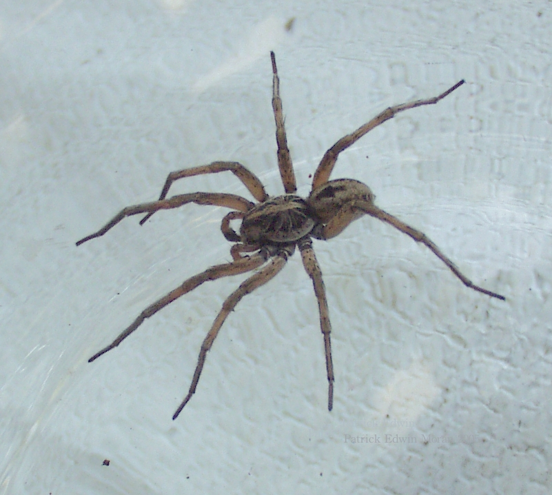 North Dakota Spider Identification http://gustavotalln.girlshopes.com/blackspidersnorthcarolina/