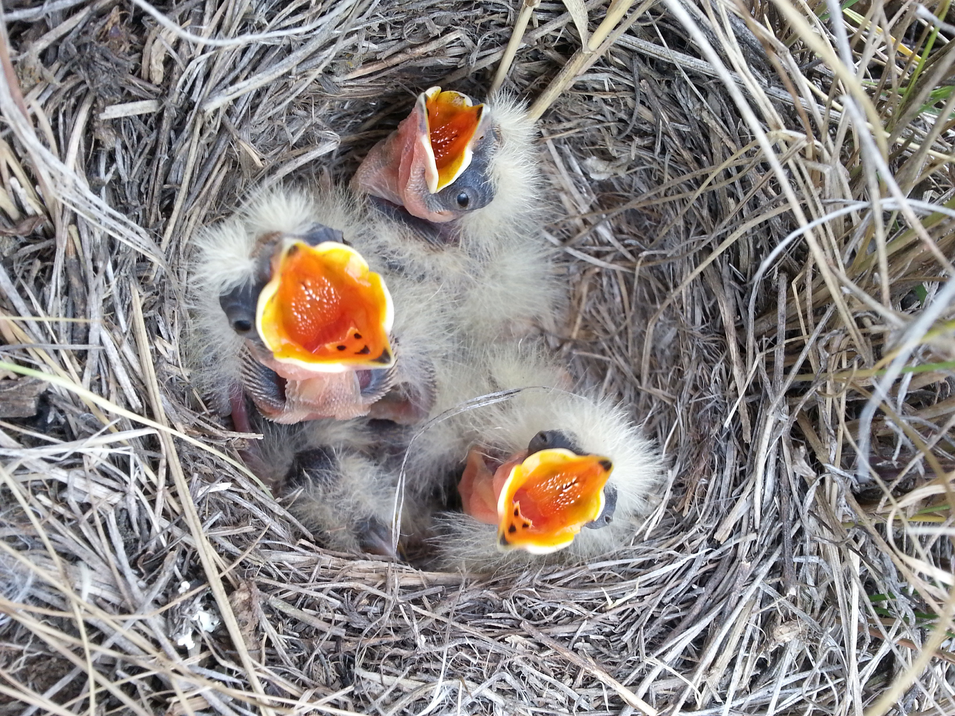 Can Baby Birds Be Fed Cat Food Gravy