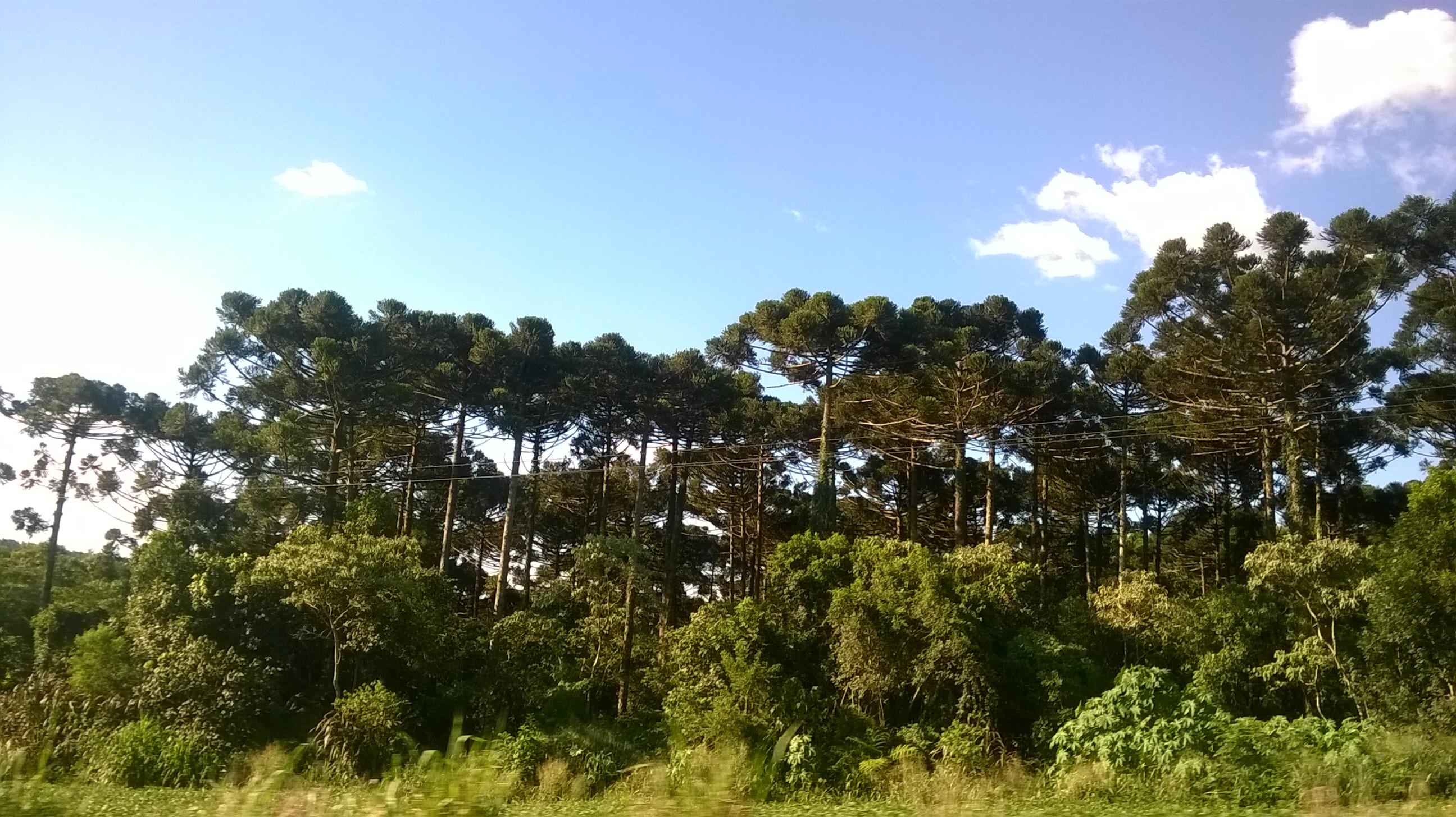 Ibema Paraná fonte: upload.wikimedia.org