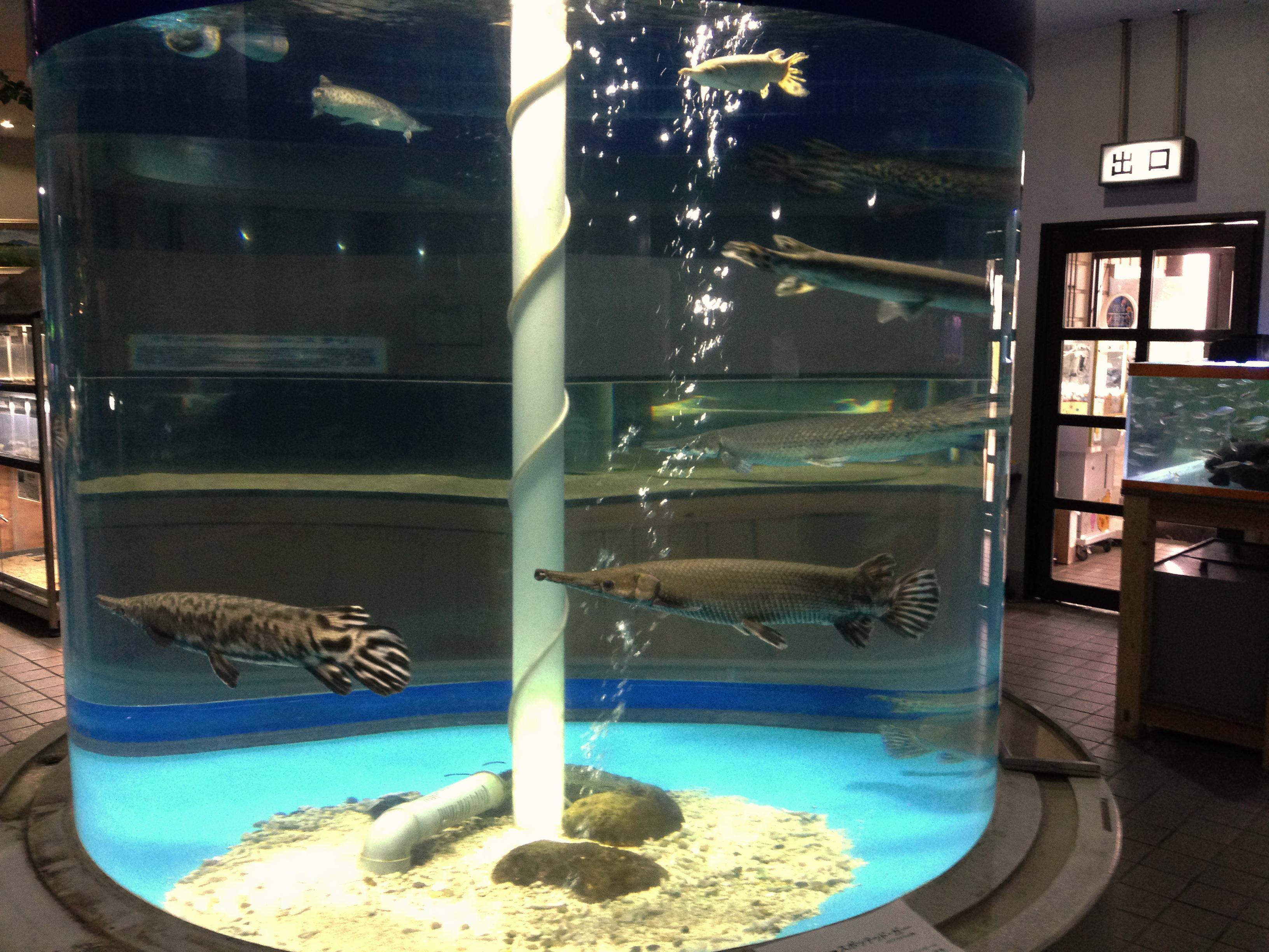 filekasumigaurashi aquarium cylinder tankjpg wikimedia commons