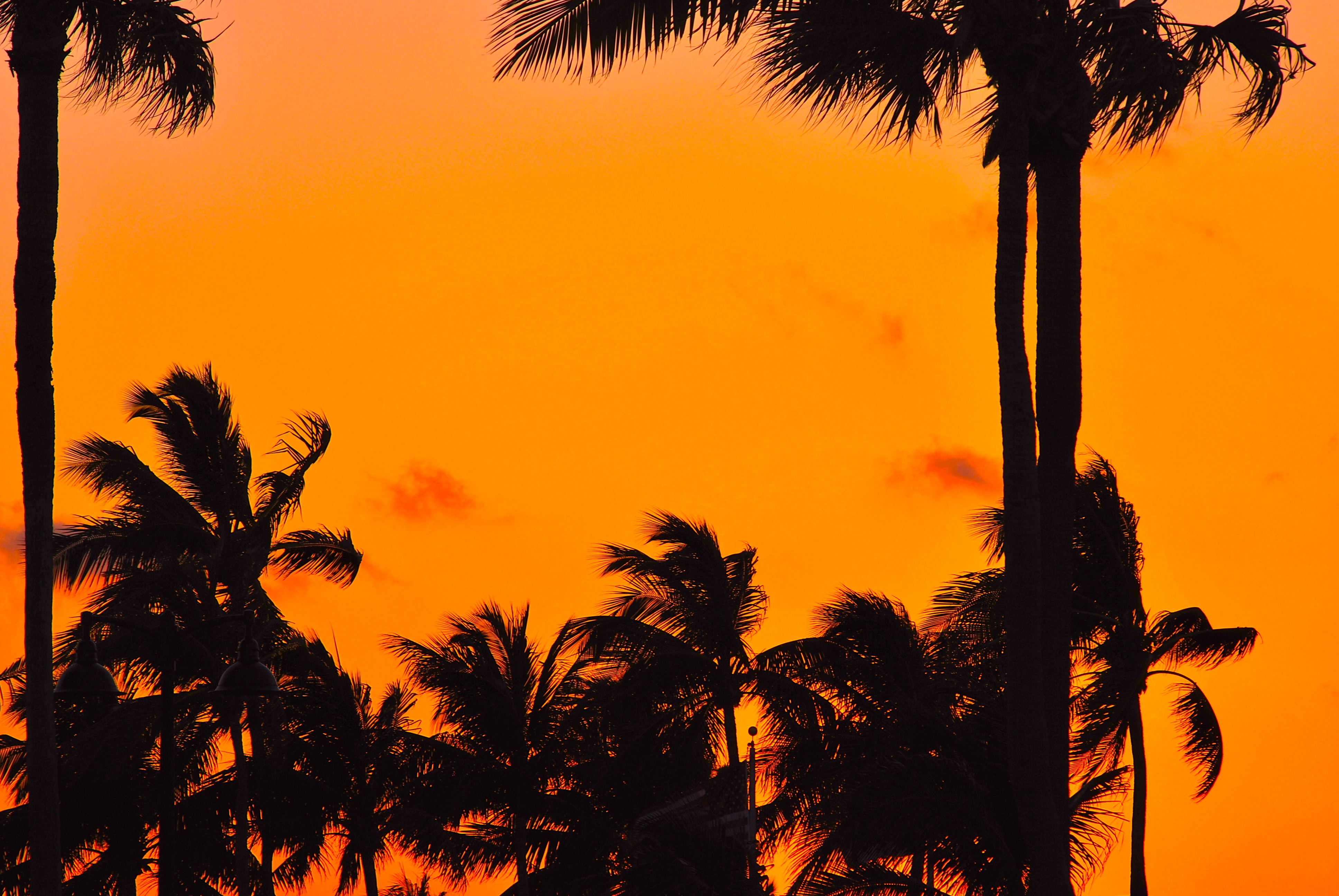 FilePalm Trees At Sunset In Fort LauderdaleJPG