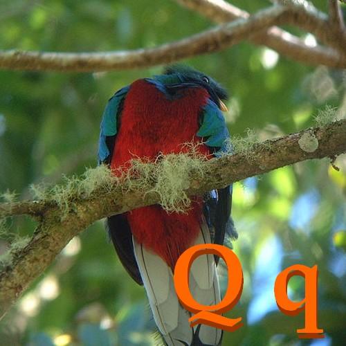 Les animaux Q_Quetzal