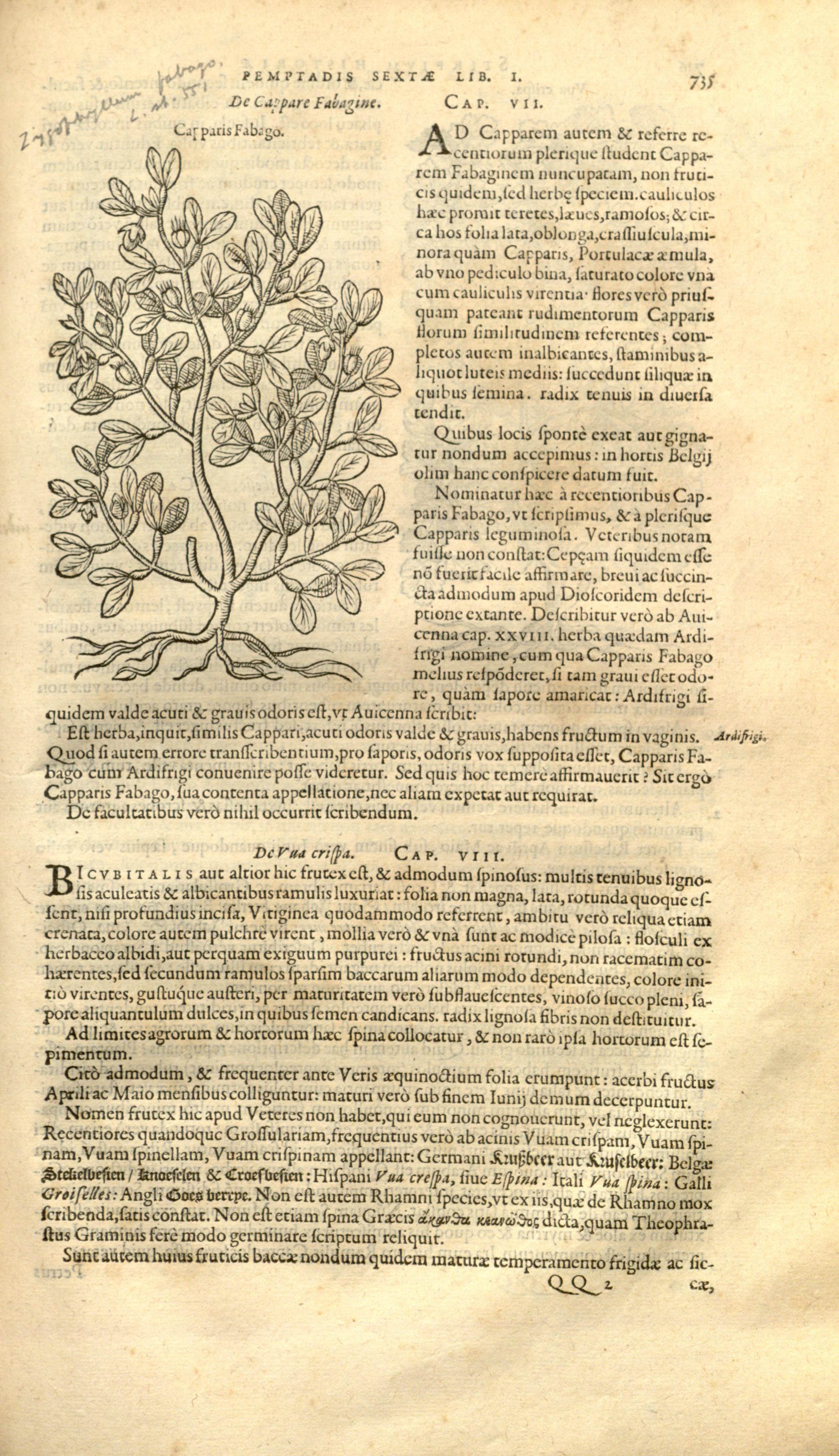 Stirpium historiae pemptades sex, sive libri XXX (Page 735) BHL8100391.jpg Remberti Dodonaei ... Stirpium historiae pemptades sex, sive libri XXX. Date 1583