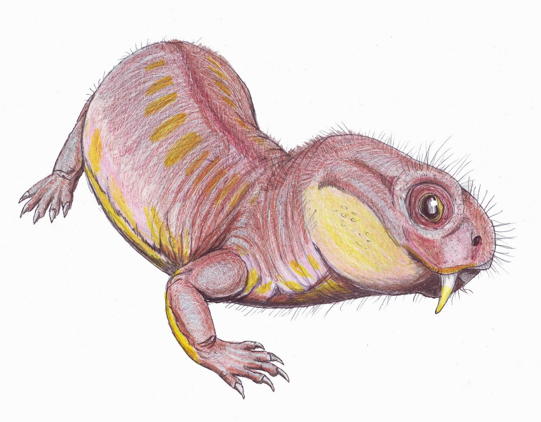 Depiction of Diictodontia