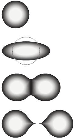 "The stages of binary fission in a liquid drop model. Energy input deforms the nucleus into a fat ""cigar"" shape, then a ""peanut"" shape, followed by binary fission as the two lobes exceed the short-range nuclear force attraction distance, then are pushed apart and away by their electrical charge. In the liquid drop model, the two fission fragments are predicted to be the same size. The nuclear shell model allows for them to differ in size, as usually experimentally observed. Stdef2.png"