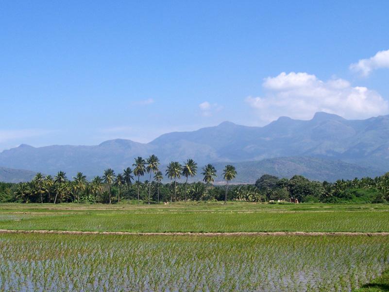 Images For > Tamil Village Thevidiya