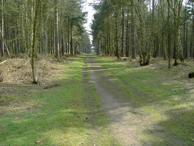 Track Looking SSE in Rowney Warren Wood - geograph.org.uk - 400447