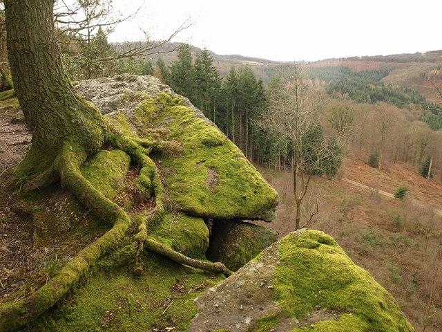 Tree on Near Hearkening Rock - geograph.org.uk - 1700650