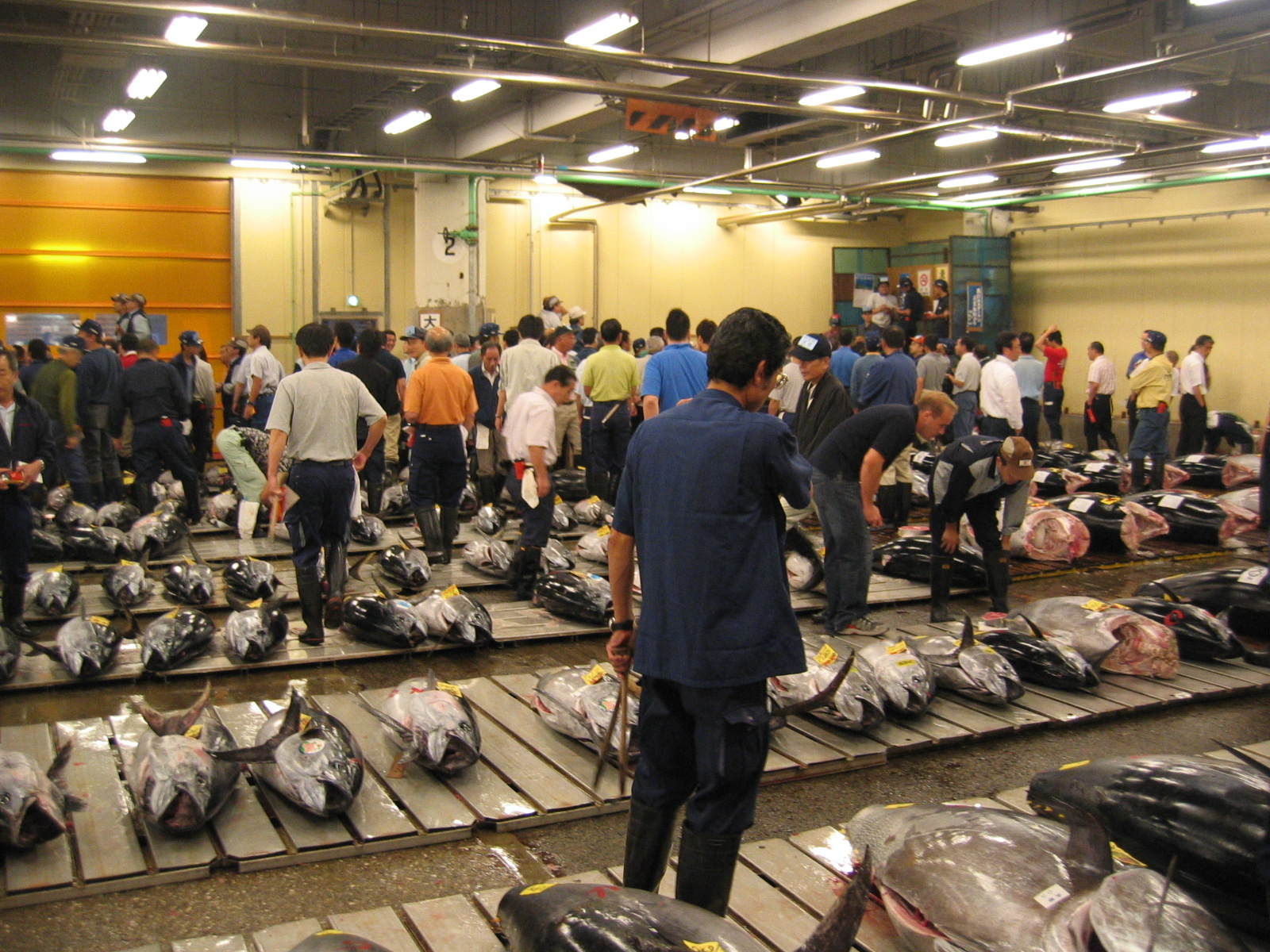 http://upload.wikimedia.org/wikipedia/commons/e/e0/Tsukiji_Fresh_Tuna_Auction.JPG