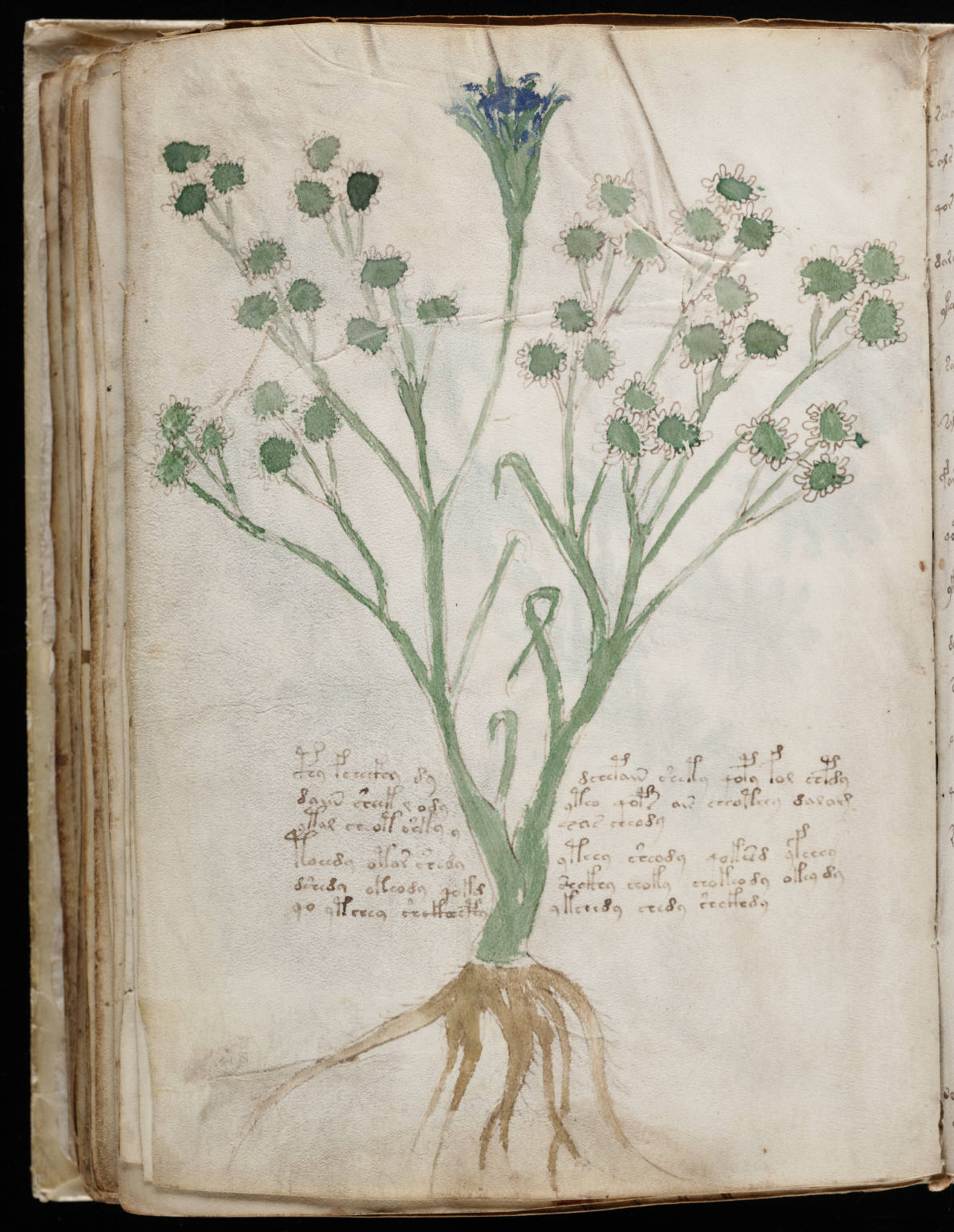 http://upload.wikimedia.org/wikipedia/commons/e/e0/Voynich_Manuscript_%28118%29.jpg