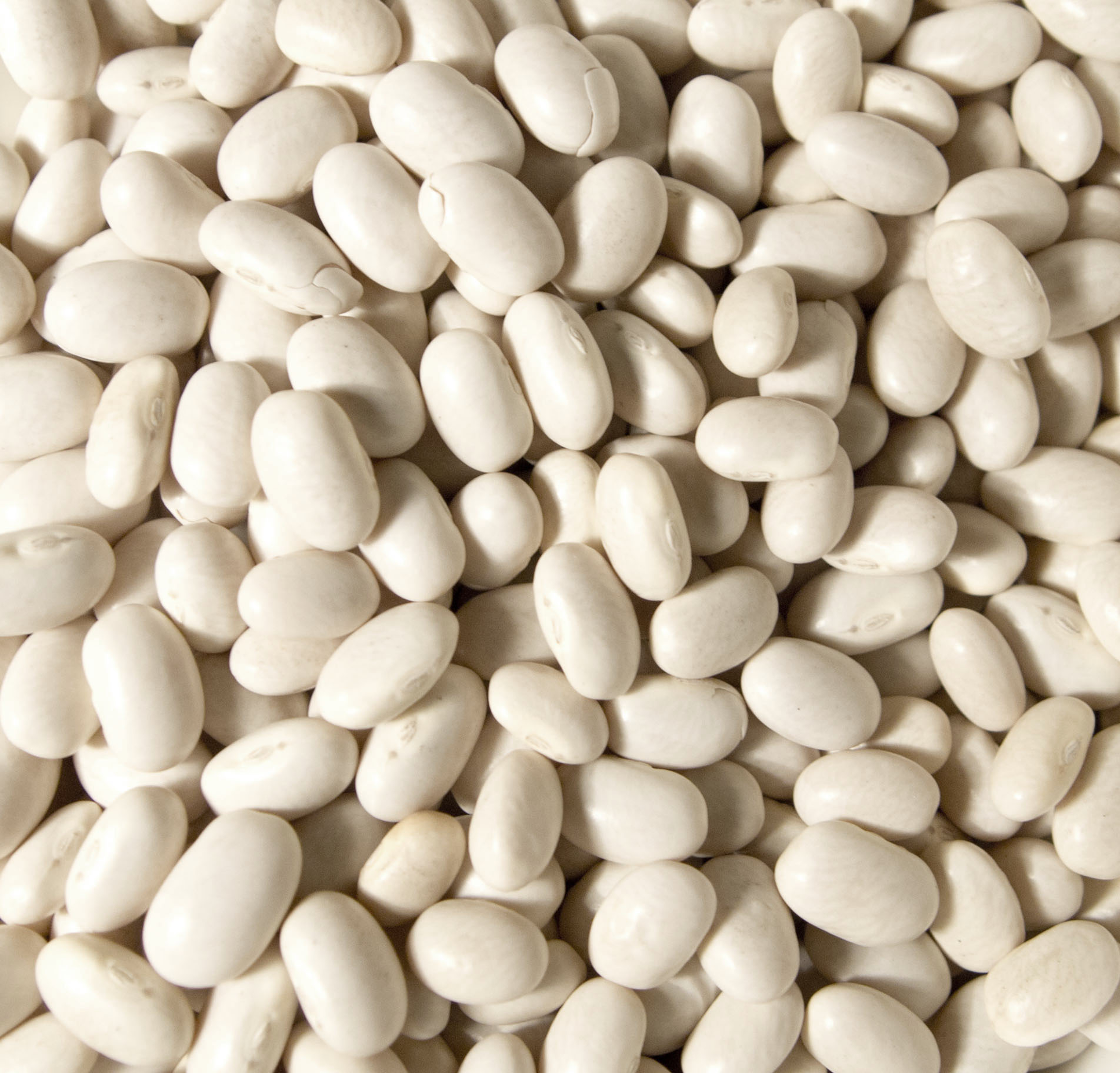 Https Commons Wikimedia Org Wiki File White Beans2 Jpg