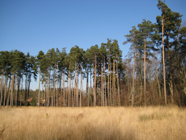 Whitmoor Common - geograph.org.uk - 696832