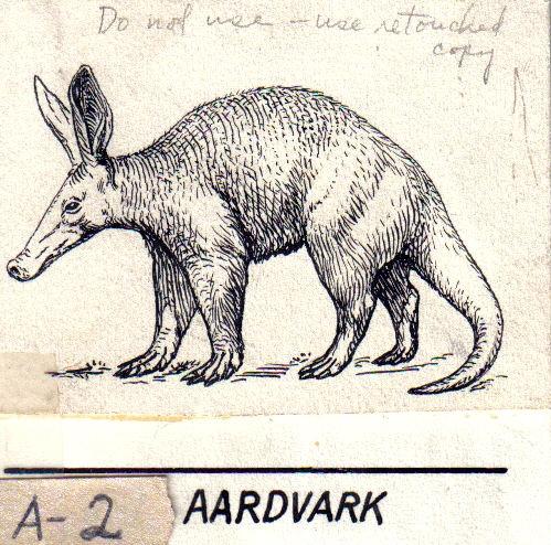 File:Aardvark (PSF).jpg