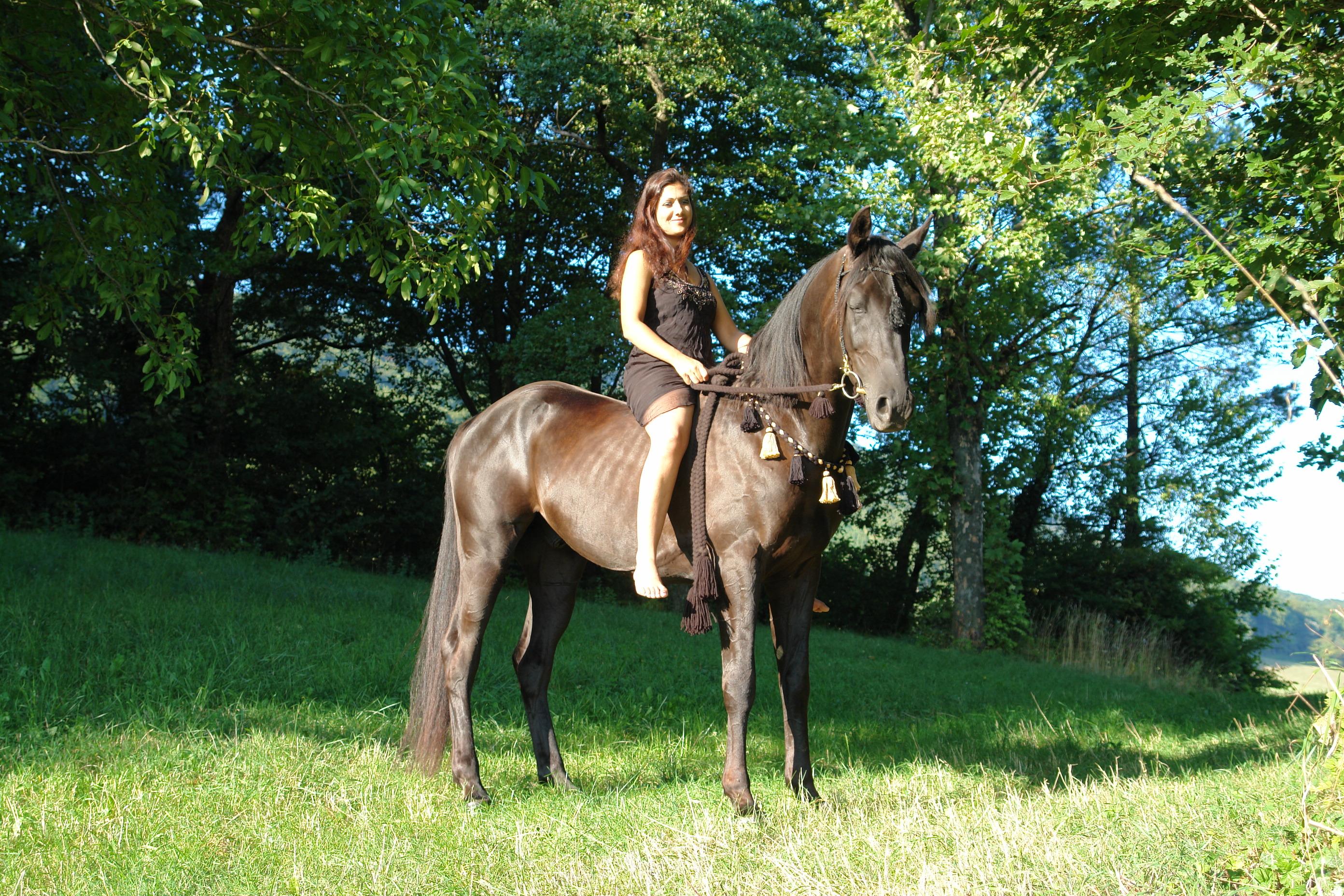 Robe noire du cheval - Wikiwand
