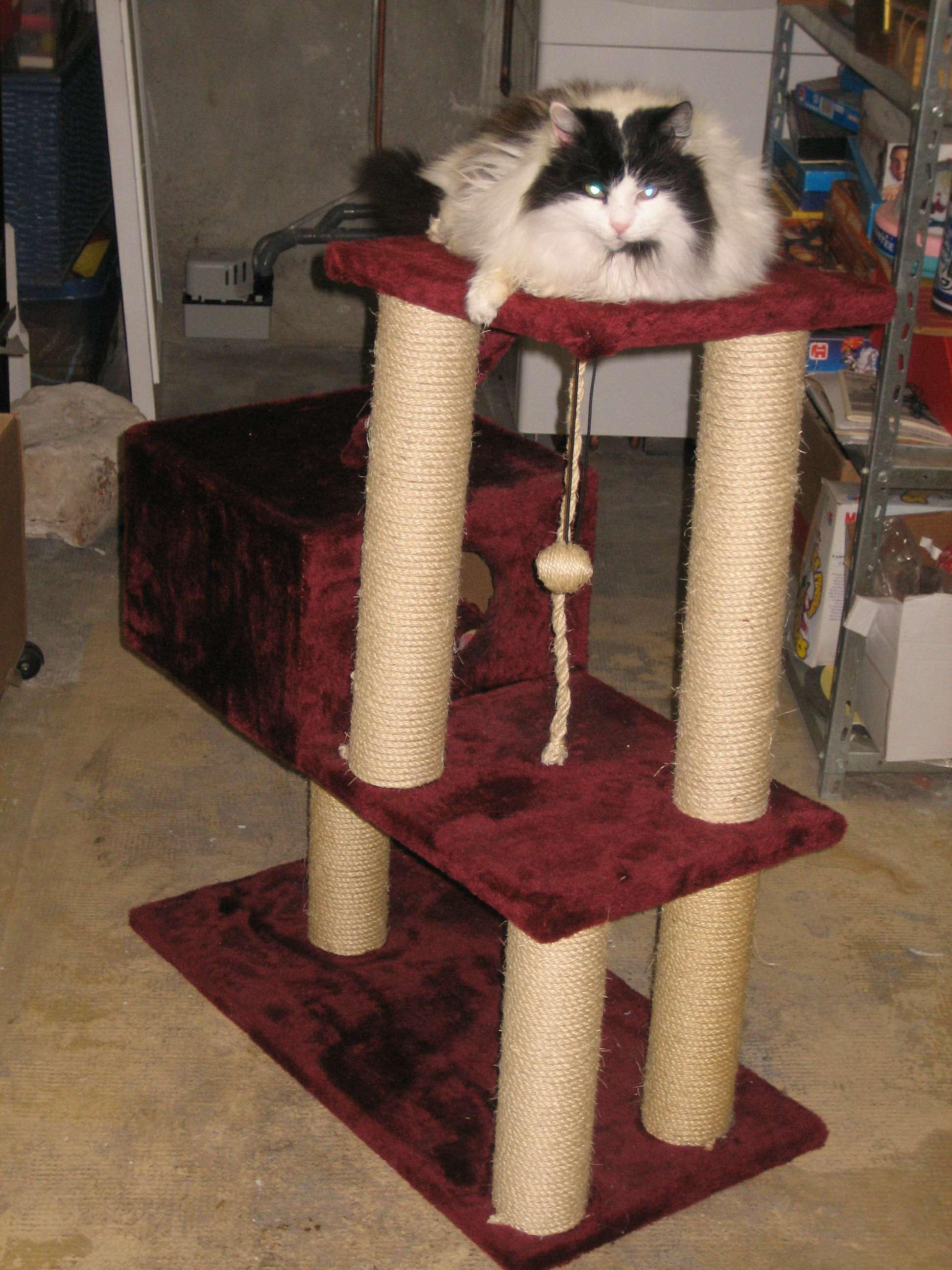 construire maison chat 5690 jpg memes. Black Bedroom Furniture Sets. Home Design Ideas