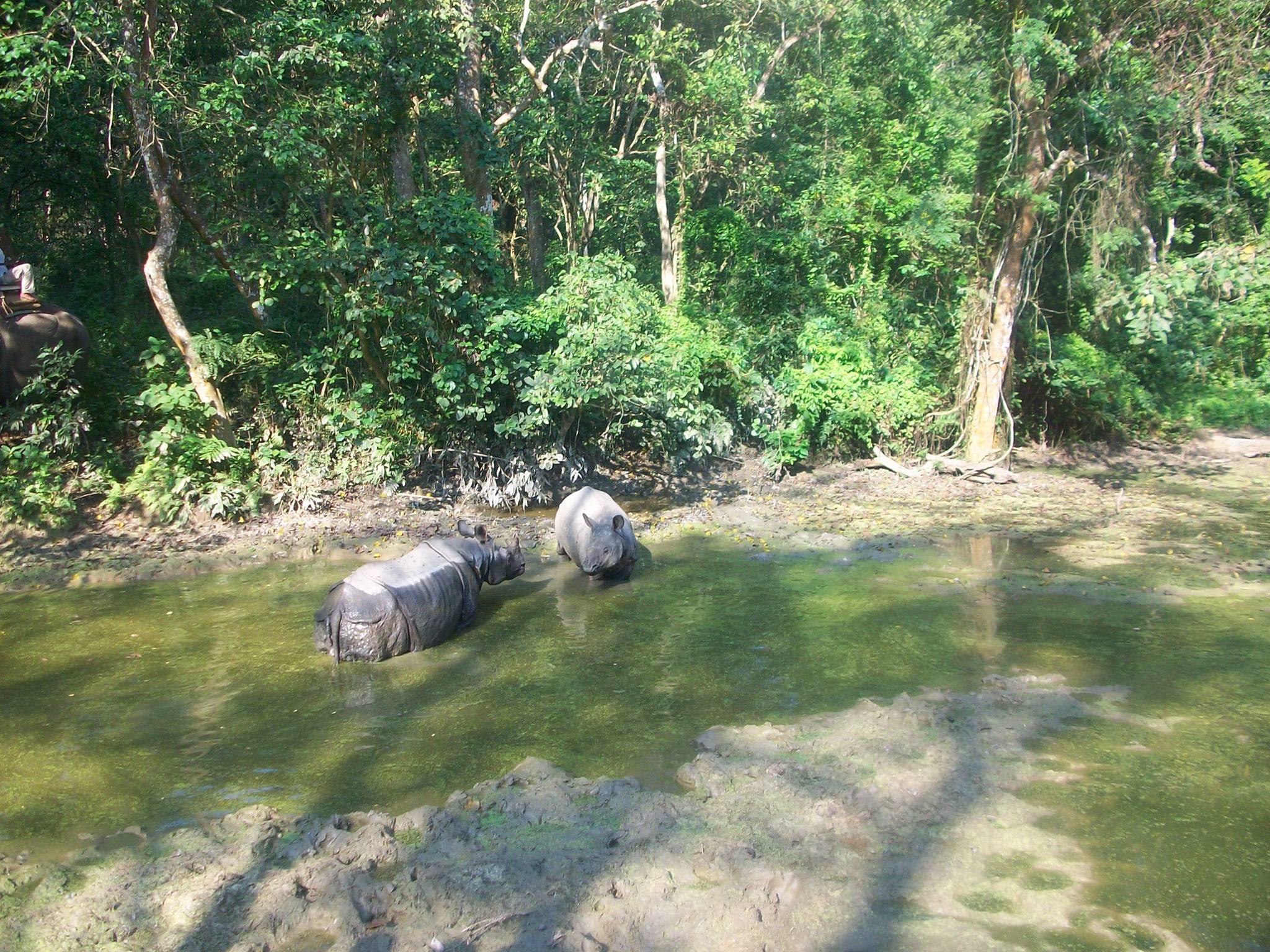 File:Asian Elephant Safari in Chitwan National Park, Chitwan, Nepal