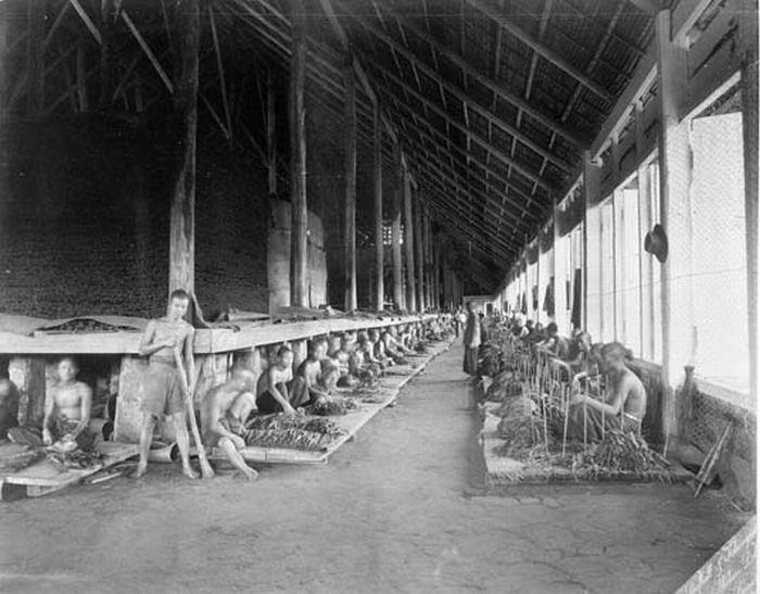 filecollectie tropenmuseum tabak wordt door chinese