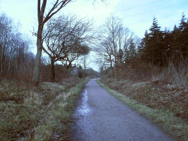 Clowes Wood - geograph.org.uk - 371844