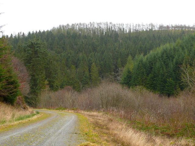 Cwm Gorlech, Fforest Brechfa - Cwm Gorlech, Brechfa Forest - geograph.org.uk - 1087634