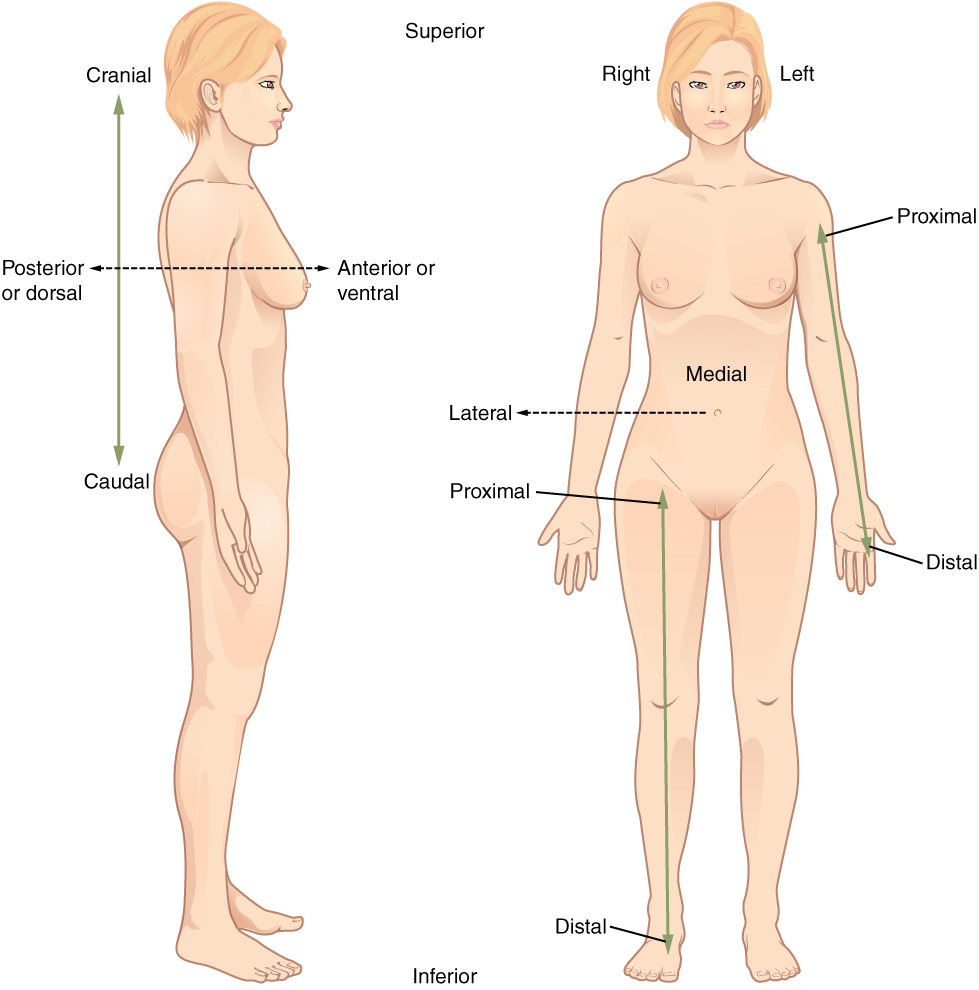 Human Anatomy | Human Body | Anatomy