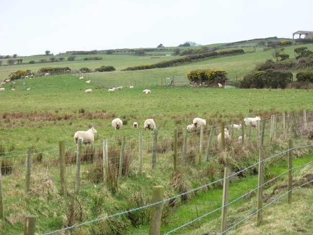 Drainage ditch and sheep on the northern edge of Cors Gadfa - geograph.org.uk - 1277840.jpg