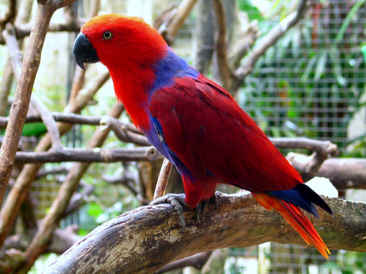 What Is Best Food For Parrots