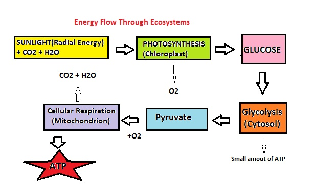 Flow Charts Templates: Energy flow chart.jpg - Wikimedia Commons,Chart