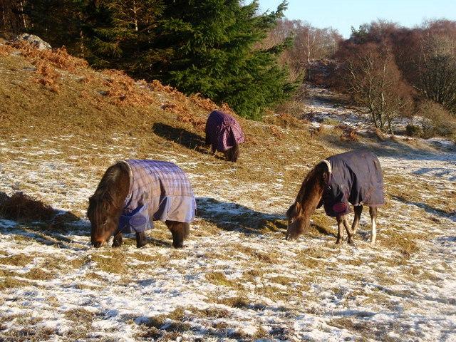 File:Even horses need coats - geograph.org.uk - 1081263.jpg