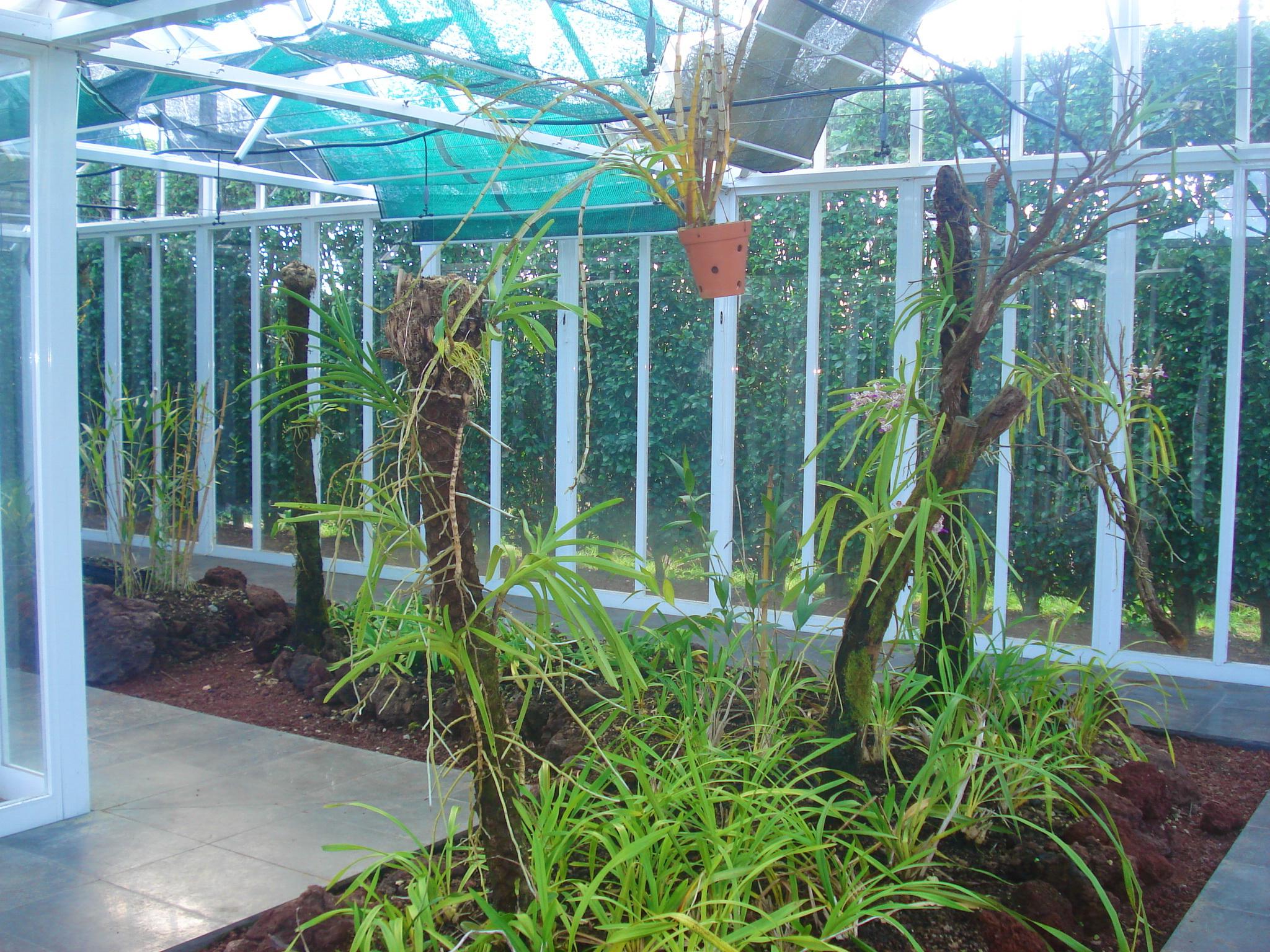 jardim botanico horta faial:Interior Botanical Garden