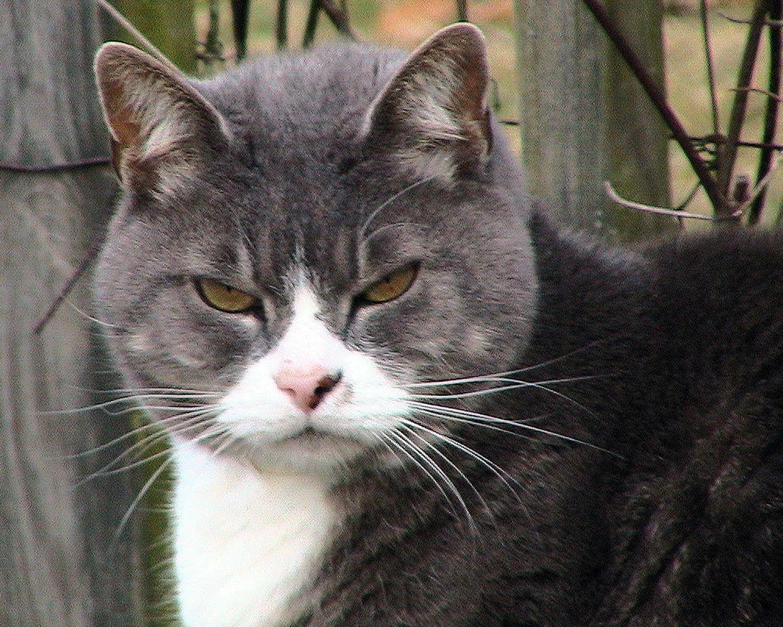 File:Fat tabby kitten.jpg - Wikimedia Commons