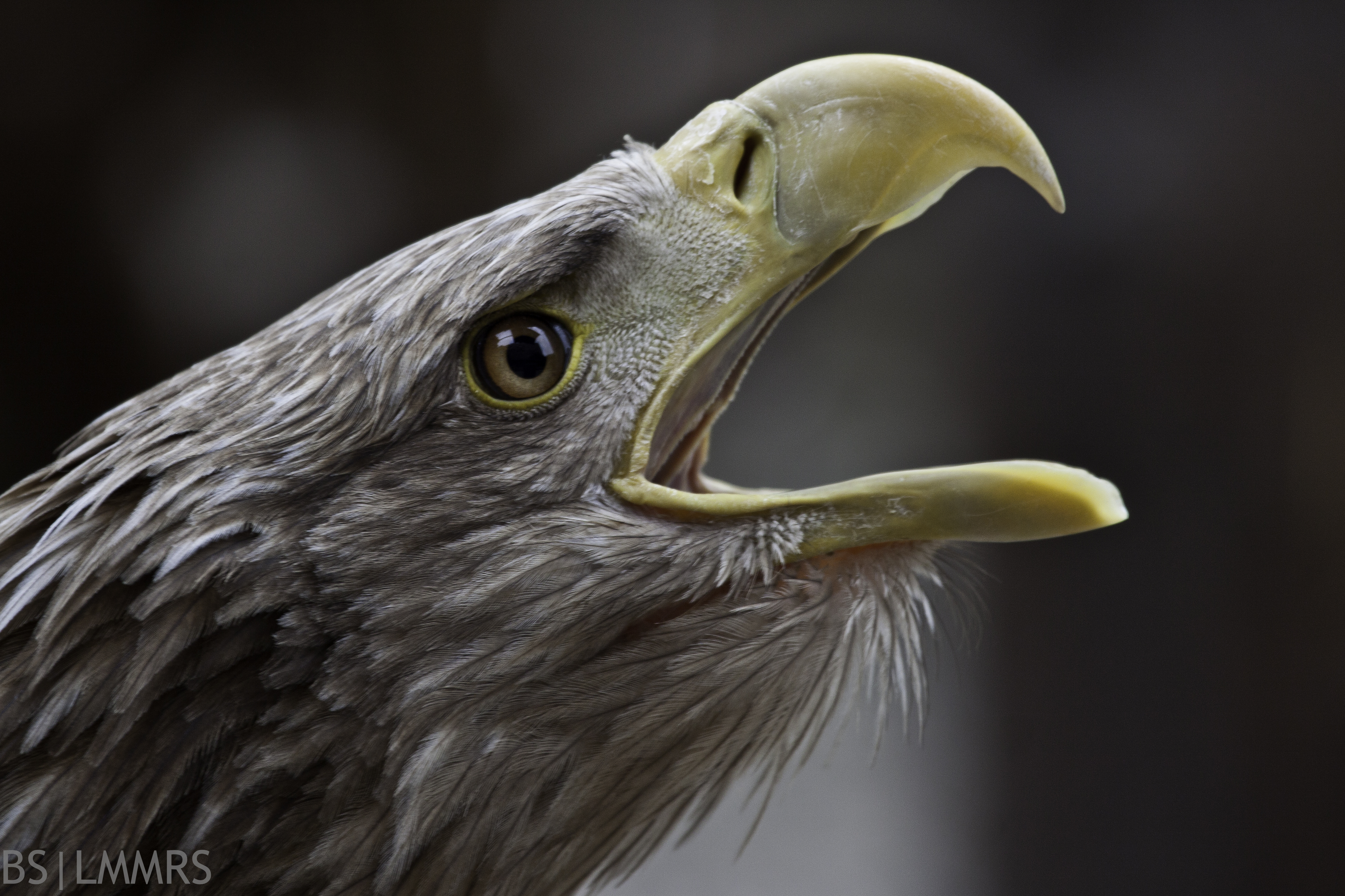 finger in my beak -).jpg