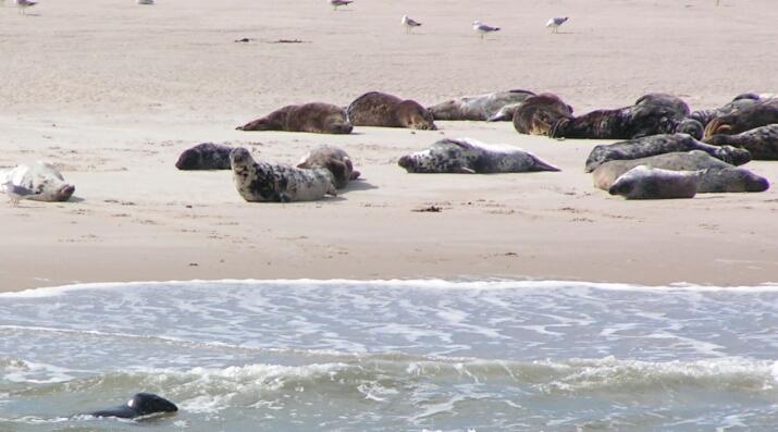 Robben am Meer