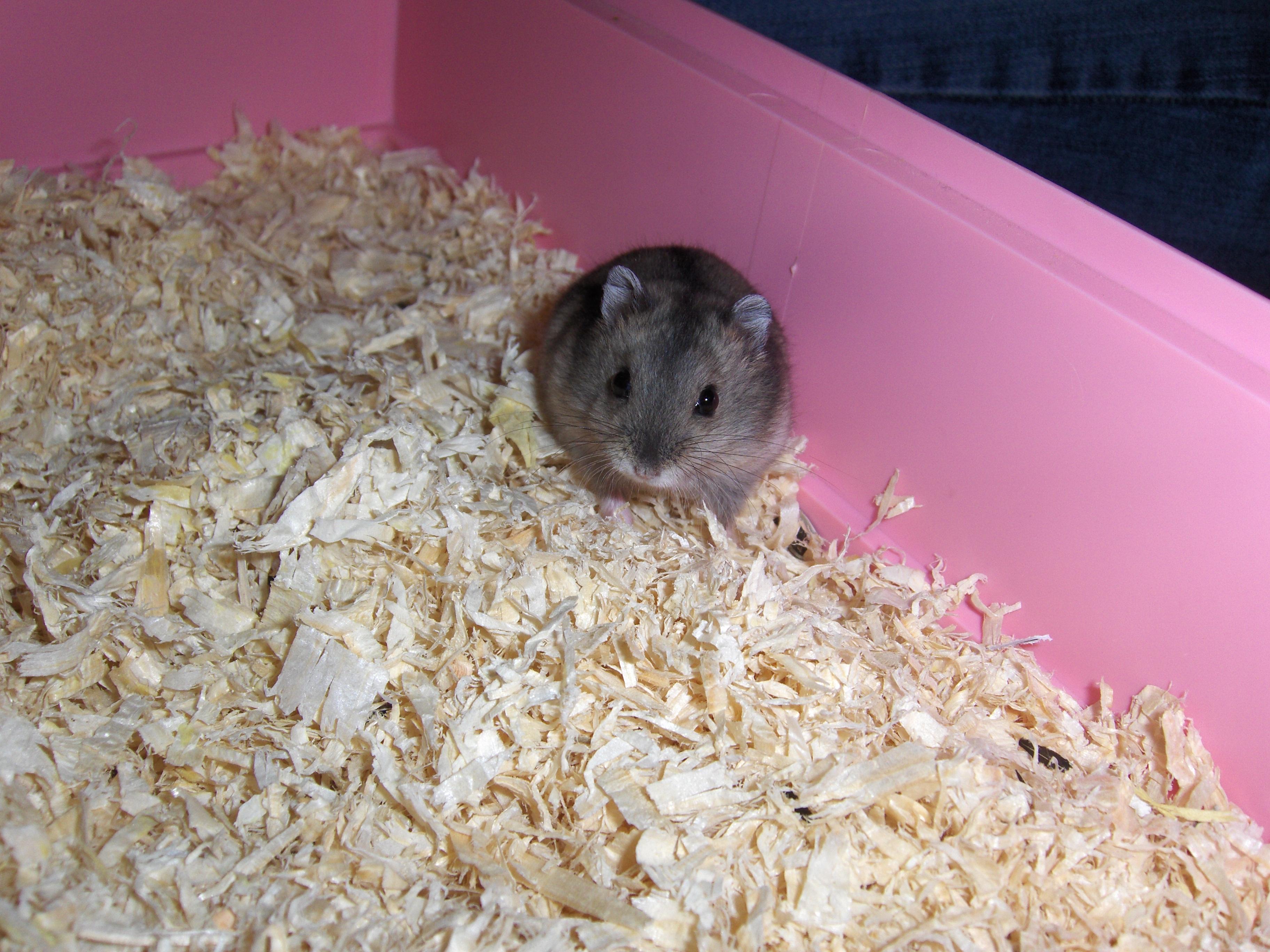 e dating hamster free porr