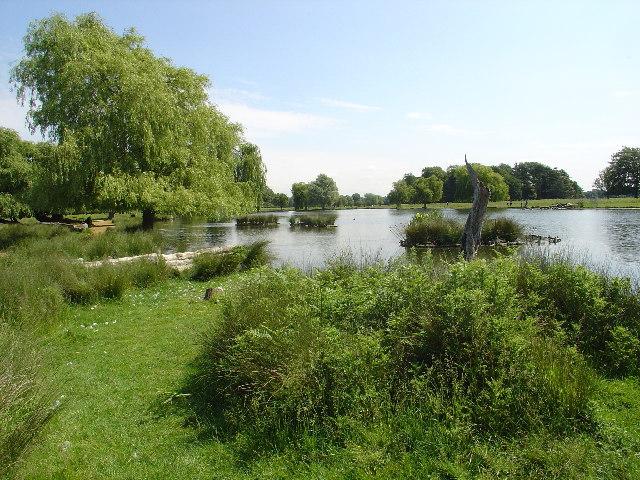 Heron Pond, Bushy Park - geograph.org.uk - 17325