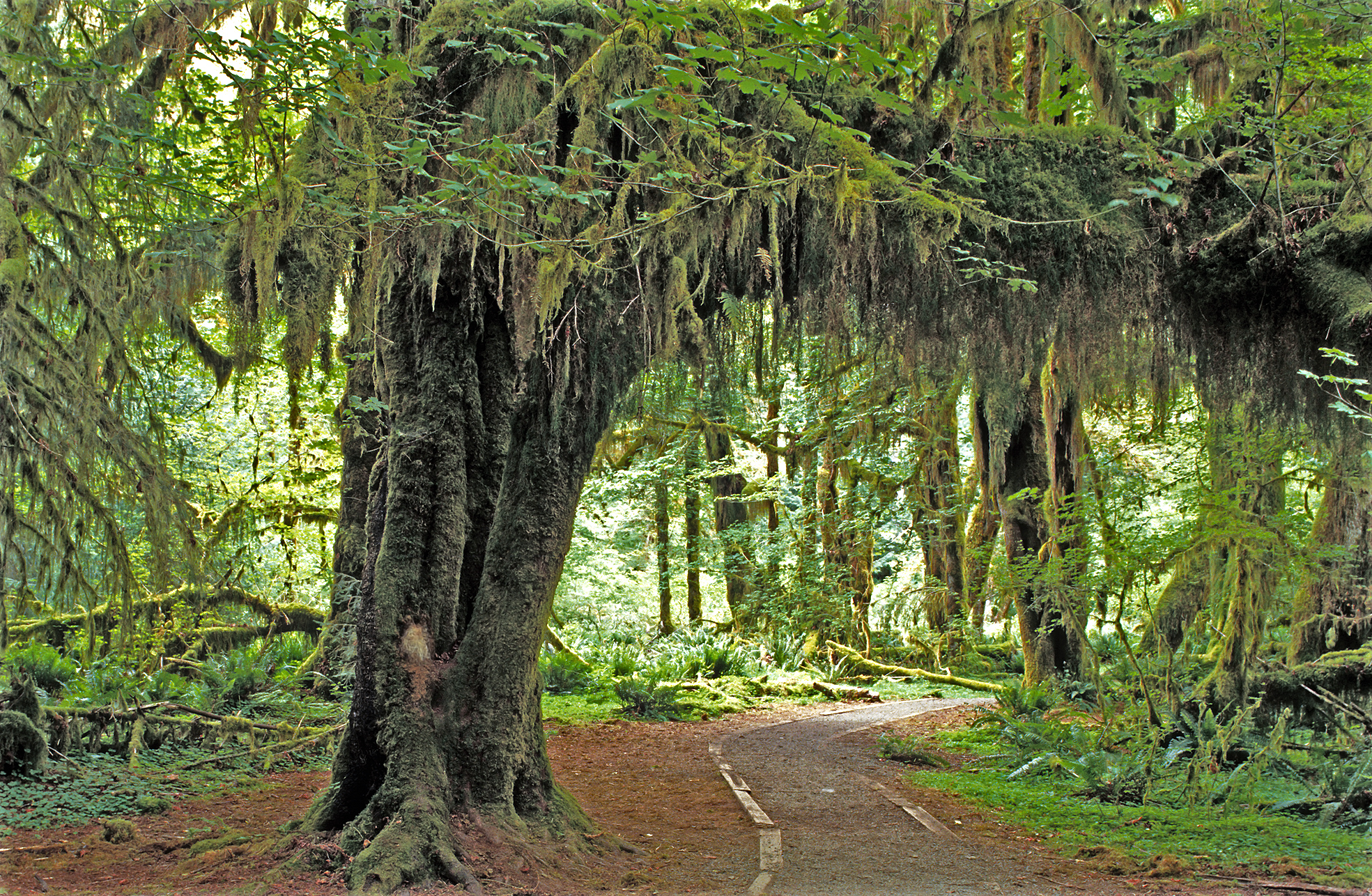 Olympic national park one of the wildest places left in the usa 36