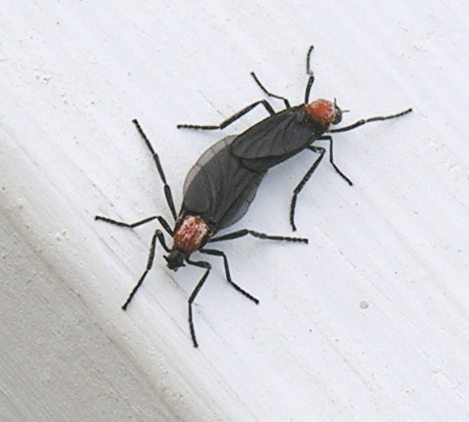 http://upload.wikimedia.org/wikipedia/commons/e/e1/Lovebugs.jpg