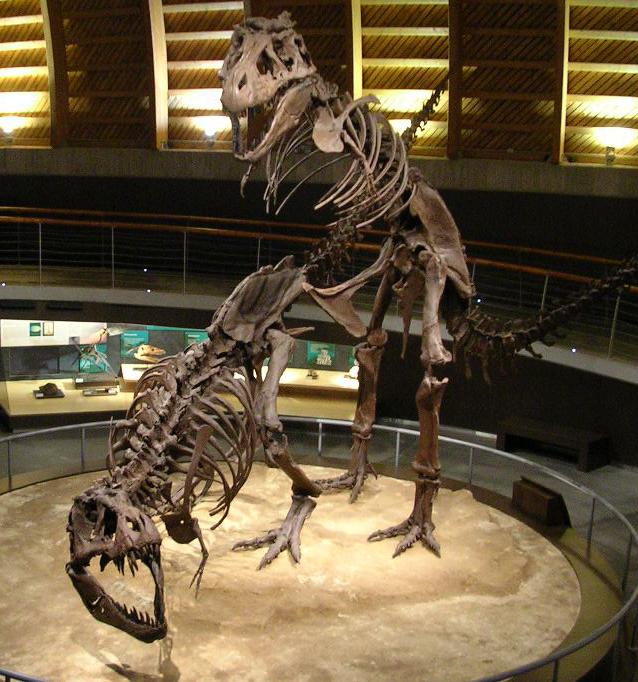 Tyrannosaurus-Skelettabgüsse in Paarungs-Position im Jurassic Museum of Asturies