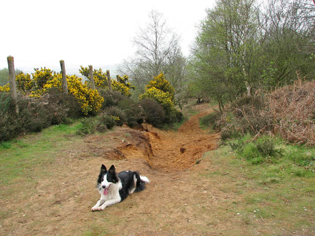 Narrow path to Kelling Halt - geograph.org.uk - 1249458