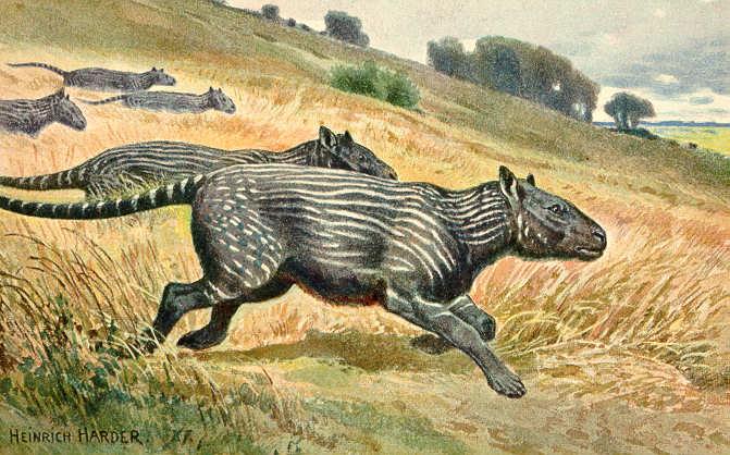 Cicavec phenacodus
