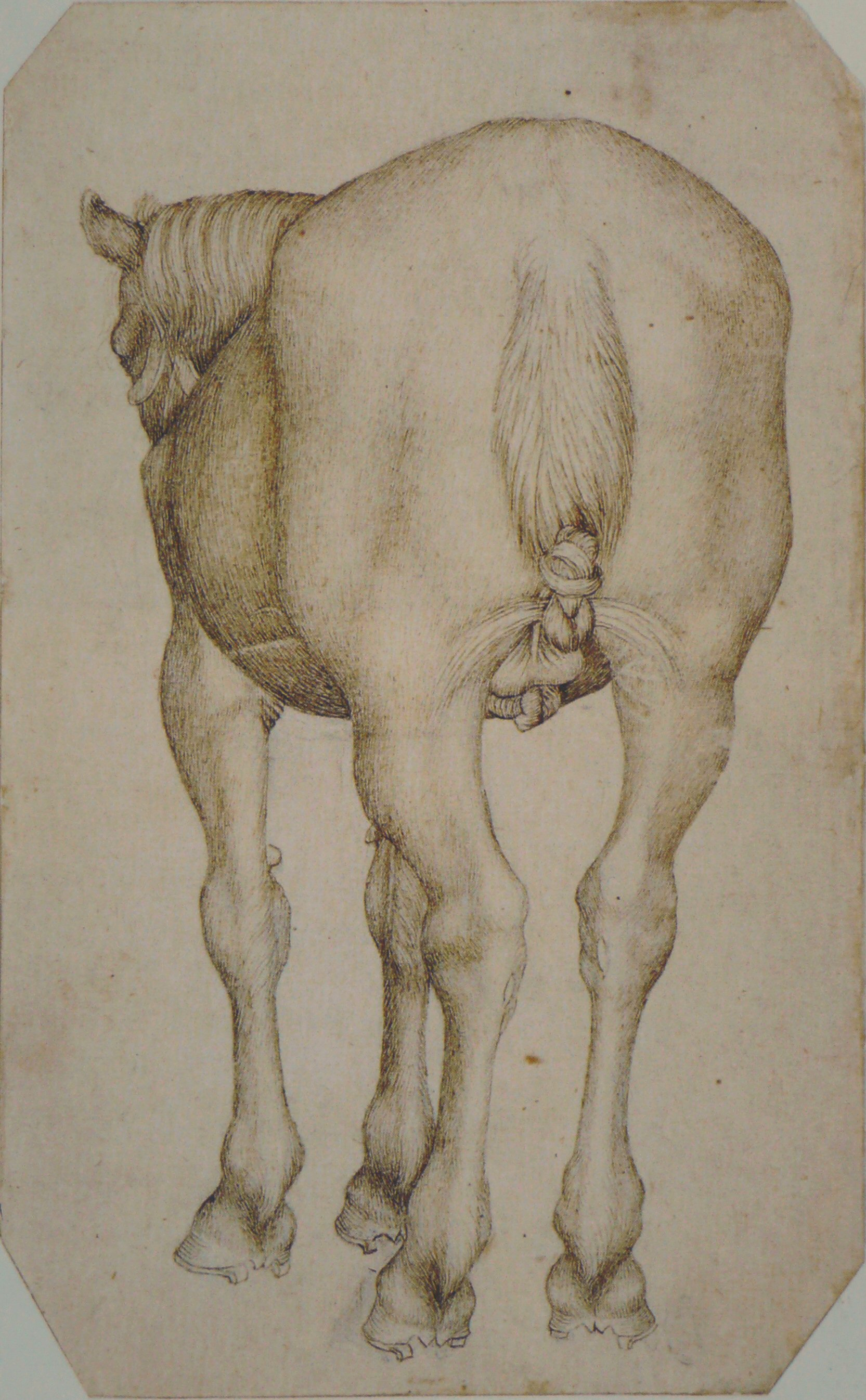 File:Pisanello - Codex Vallardi 2444.jpg