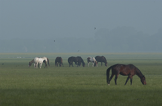Port Meadow horses in mist