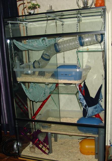 file rat cage. Black Bedroom Furniture Sets. Home Design Ideas