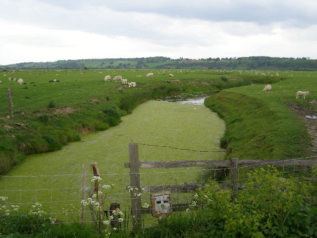Romney Marsh sheep grazing near Rye Marsh farm - geograph.org.uk - 437557