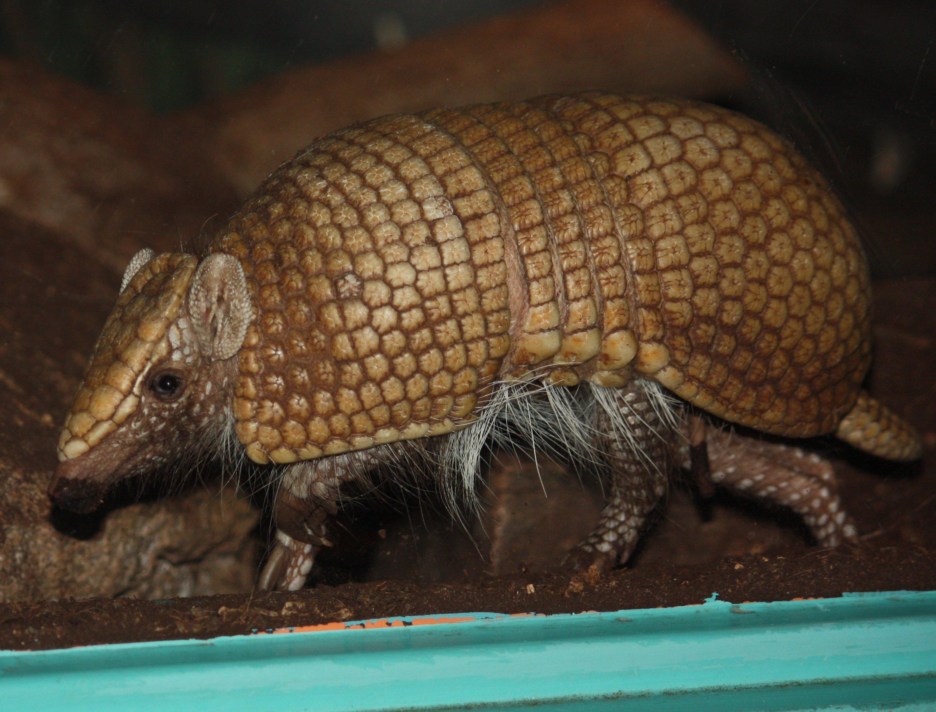Mamíferos Nativos del Paraguay - Ecología - Taringa!
