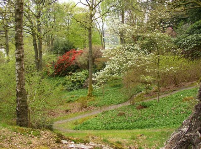 Stagshaw Garden, Ambleside - geograph.org.uk - 166358