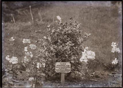 Tree planted by Clara Mordan