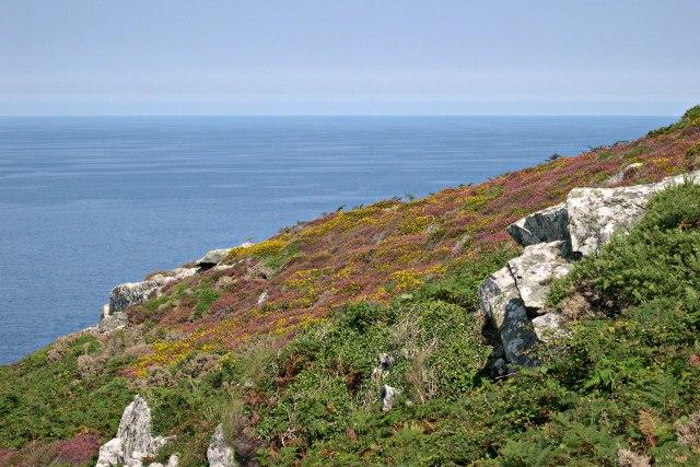 Trevega Cliff - geograph.org.uk - 306665