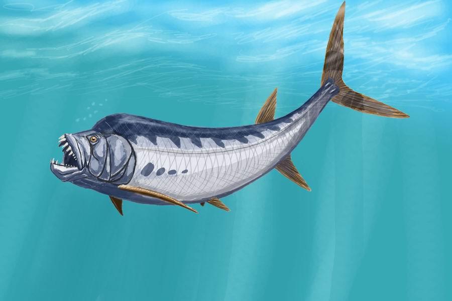 Clash Of Aquatic Titans: Hyneria Vs Xiphactinus | Dinosaur ...